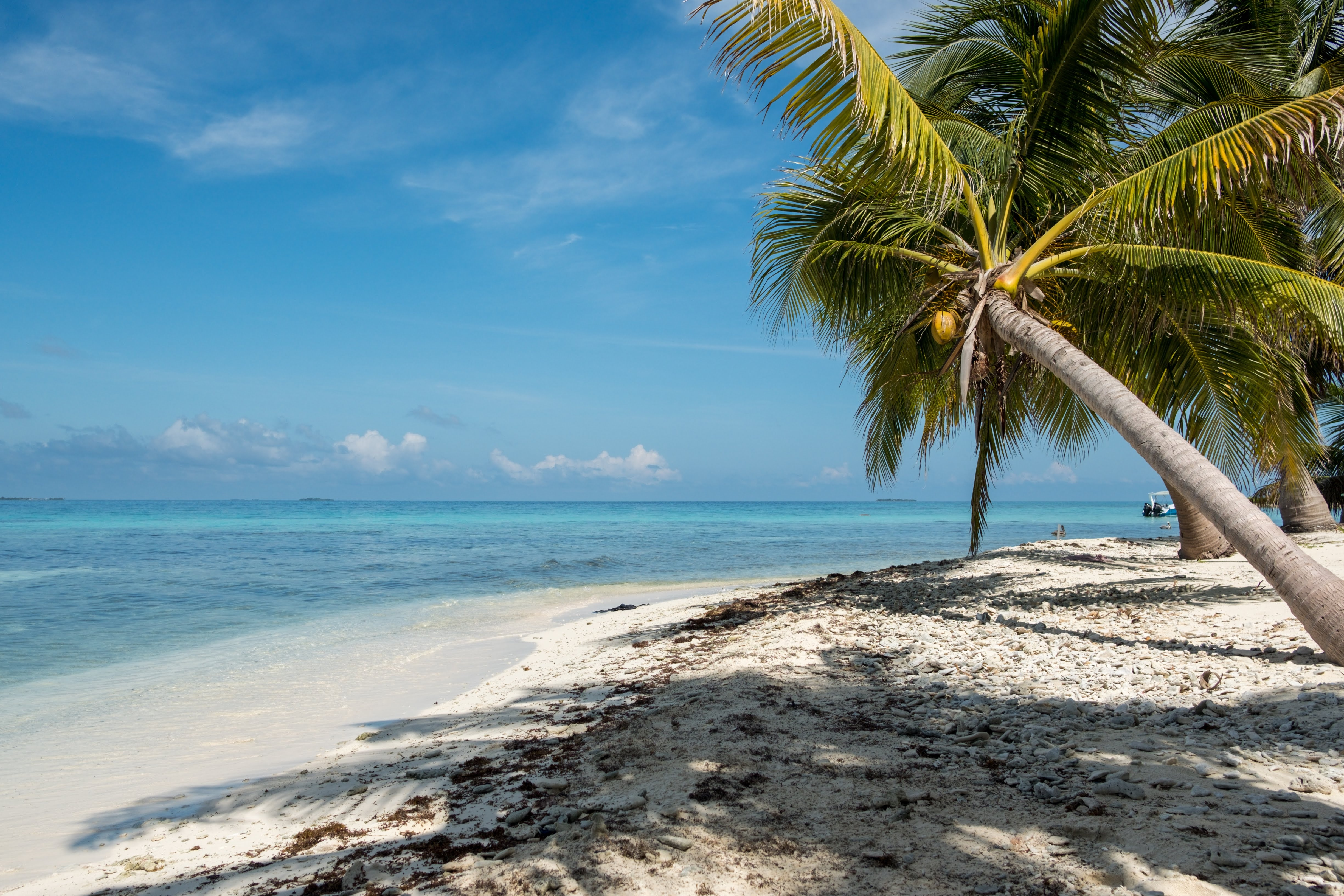 Bali plans to reopen, Belize and Seychelles easing restrictions, Qatar Airways, and Hilton promotions
